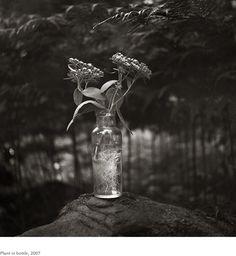 Kristoffer Albrecht, Plant in Bottle, 2007