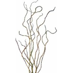 FiftyFlowers.com - Curly Willow Branch