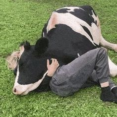 This is what jealousy looks like: funny Cute Baby Cow, Baby Cows, Cute Cows, Cute Babies, Cute Creatures, Beautiful Creatures, Farm Animals, Funny Animals, Foto Cowgirl