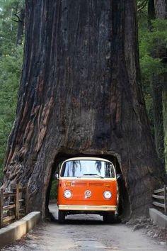Sequoia National Park, California: