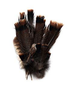 turkey,owl and sparrow (mary jo hoffman)