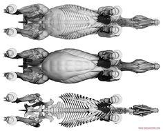 Insect Anatomy, Horse Anatomy, Animal Anatomy, Horse Sculpture, Animal Sculptures, Horse Drawings, Animal Drawings, Anatomy Sculpture, Greyhound Art