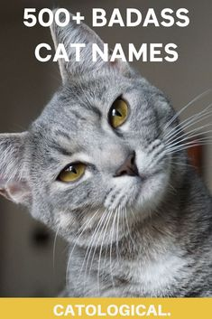 Your furbaby may still be a feared fighter, or he could just be a right softie who simply prefers love over war.Regardless, giving your male cat a badass name is a great way to make sure he commands respect from all whom he meets! #catlover #catnames #badasscats Unique Cat Names, Unique Cats, Unique Animals, Pet Memorial Gifts, Cat Memorial, Memorial Ideas, Badass Cat Names, Pet Loss Grief, Kitten Care
