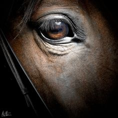Matthew Seed - The Horse Photographer -private commission horse photography - Limited edition equine photography All The Pretty Horses, Beautiful Horses, Animals Beautiful, Horse Photos, Horse Pictures, Equine Photography, Animal Photography, Photography Gallery, Regard Animal