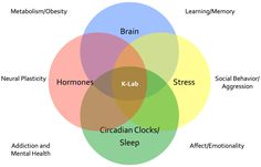 Neuroendocrinology and Circadian Biology | Sleep and Performance ...