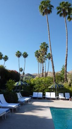 Love the palms w arid mountain backdrop. swimming pool at the parker palm springs
