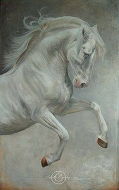 Lusitano - Carolle Beaudry