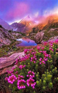 Beautiful Landscape of Nature Image Nature, Nature Photos, Beautiful World, Beautiful Places, Beautiful Scenery, Beautiful Nature Scenes, Beautiful Rocks, Beautiful Flowers, Amazing Nature