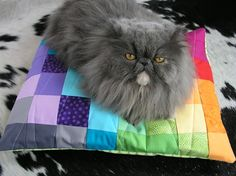 Pet (cat or dog) bed sewn from fabric scraps