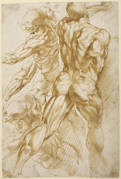 Peter Paul Rubens, Anatomical Studies, c. 1600-05. In a technique known by the French term écorché, three figures appear as if without skin. Drawn in luminous light brown ink, the principal figure demonstrates the muscular structure of the back, buttocks, and legs. Fascinated with the structure of the human body, Rubens then drew two subsidiary views of the same powerful form and a detail of the left arm from a different angle. -The J. Paul Getty Trust-