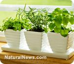 Gardening in small spaces 101 - Start a garden no matter your location