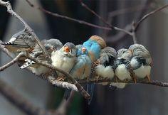 Je vous mets au défi de trouver encore plus mignon que ces 25 animaux qui se font des calins et se servent d'oreillers entre copains !