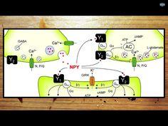 Quimic Reaction-Neurons