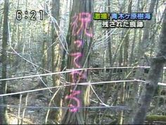 "[Right side upper telop] Scoop! Vestiges in forest of Aokigahara. [Written words on the wood] ""CELEBRATE YOU!"" in Kanji and Kana ""祝ってやる"" It seems to been mistook. ""呪ってやる"" might be correct is. means ""CURSE YOU!"". The forest of Aokigahara is famous as known as major suicide place."