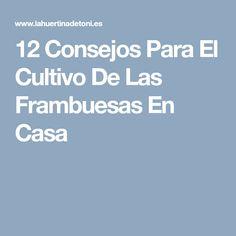 12 Consejos Para El Cultivo De Las Frambuesas En Casa
