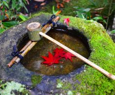 """Red leaves are resting in a """"Tsukubai"""" which is a Japanese basin traditionally used as a part of the tea ceremony. You can still see them at many Zen temples in Japan."""