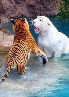 """Wild life: hey, wanna hear a secret?"""" """"sure"""" """"ok come here......"""