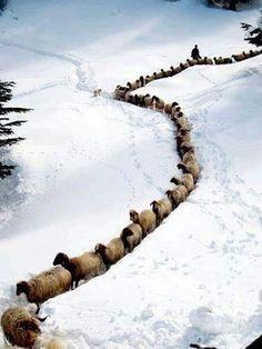 Winter in the Province Kurdistan, western Iran. ➡ https://m.facebook.com/IranInPhoto/?refid=13