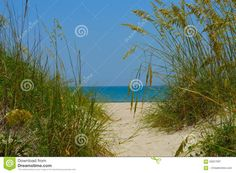 Walkway To The Beach - Download From Over 35 Million High Quality Stock Photos, Images, Vectors. Sign up for FREE today. Image: 59257997