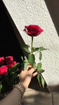 Beautiful Flowers Wallpapers, Beautiful Rose Flowers, Romantic Roses, Love Flowers, Flower Background Wallpaper, Flower Phone Wallpaper, Flower Backgrounds, Flower Wallpaper, Cute Girl Poses