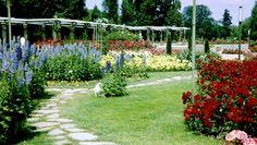 Lyon juin 1967, la roseraie du Parc de la Tête d'Or