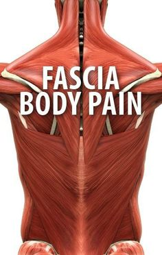 Dr Oz explained how the Fascia runs through the body and why our regular activities could inflame it. Try a foam roller workout next time you get back pain. http://www.recapo.com/dr-oz/dr-oz-advice/dr-oz-fascia-body-pain-causes-foam-roller-back-pain-workout-remedy/