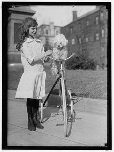Girl, bike and poodle Antique Photos, Vintage Pictures, Vintage Photographs, Old Pictures, Vintage Images, Vintage Dog, Vintage Girls, Vintage Children, Poodles