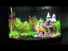 harry potter fish tanks - Google Search