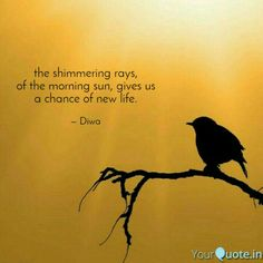 #sun #morning #life #haiku #yqbaba  Follow my writings on https://www.yourquote.in/diwani #yourquote