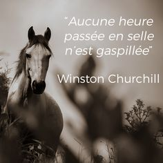 Citation équestre Most Beautiful Images, Beautiful Horses, Horses And Dogs, Animals And Pets, Farm Images, Equestrian Quotes, Inspirational Phrases, Horse Riding, Quotes