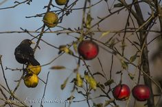 Vroege Vogels: Kerstballen?