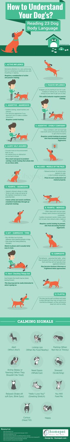 Understand Your Dog – Read 23 Dog Body Language Cues - If you want to understand your dog completely, it is important that you understand your dog's body language. This infographic will help you on the way. - #infographic