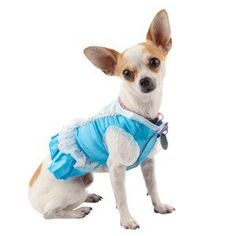 Disney Princess Dog Costume Dress Small Blue *** Check out the image by visiting the link. (This is an affiliate link)