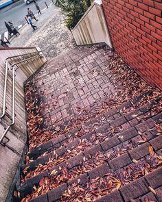 落ち葉  #横浜スタジアム #横浜公園  #秋 #落ち葉 #葉 #階段 #日本 #風景 #写真好きな人と繋がりたい #autumn #winter #fall #leaves #photo #instagram #japan #yokohama #landscape #stairs #street #scene #igers #igersjp #ig_japan #instagramers #photooftheday #picoftheday #insta #instagood #instadaily