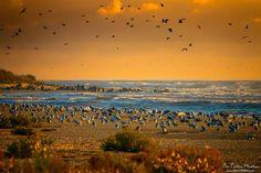 Black Sea, Romania ___ by Dan Cristian Mihailescu