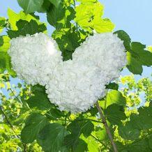 Bloom White flowers