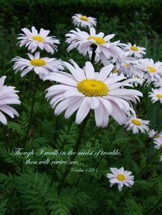 Though I walk in the midst of trouble thou wilt revive me Psalms 138:7a