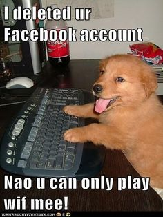 funny dog pictures - I Has A Hotdog: Play wif me not Facebook!