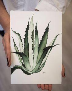 Aloe watercolor / Acualera aloe @nahia.coello