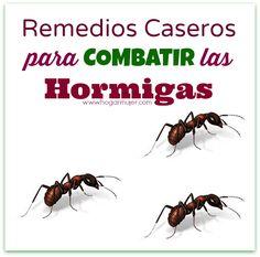 5 Remedios hechos en casa y naturales para combatir a las hormigas.