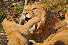 All sizes | Jasraj playbites his sibling | Flickr - Photo Sharing!