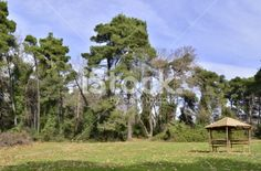 kiosk in forest Royalty Free Stock Photo