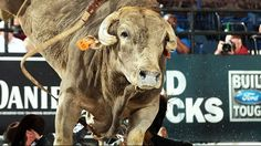 Professional Bull Riders - Smackdown to retire after 2014 season