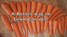 Here is a GREAT method to plant carrots that increases successful yields! Most people find it hard to get through the delicate germination period after plant. Planting Carrots Seeds, How To Plant Carrots, When To Plant Vegetables, Growing Carrots, Veggies, Vegetable Garden Tips, Starting A Vegetable Garden, Organic Gardening, Gardening Tips