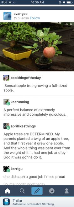 Then I get two apple trees and three years later I still have no apples