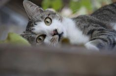 Kitty Cat Photo by M. Anitta — National Geographic Your Shot