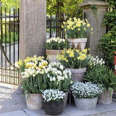 Container gardening Inspirational suggestion 1379563827 to try for your outdoor space. Container gardening Inspirational suggestion 1379563827 to try for your outdoor space. Garden Planters, Outdoor Gardens, Garden Design, Garden Containers, Garden Pots, Cottage Garden, Plants, Planting Flowers, Garden Inspiration