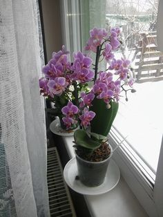 Holidays And Events, Orchids, Glass Vase, Plants, Home Decor, Gardening, Windows, Movie Posters, Decoration Home