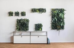 32 super ideas for nature inspired patterns forests Metal Hanging Planters, White Planters, Hanging Pots, Indoor Plant Wall, Indoor Plants, Wall Trellis, Floating Plants, Moss Wall Art, All About Plants