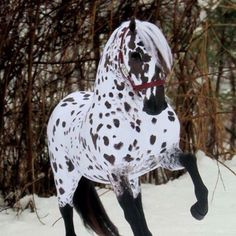 Appaloosa Horse a beautiful leopard <— there's nothing more that I want than to learn how to ride horses and train them. I think they are one of the most loveliest creatures to grave our lands ~AS Horses And Dogs, Cute Horses, Horse Love, Wild Horses, Caballos Appaloosa, Appaloosa Horses, Breyer Horses, Most Beautiful Horses, All The Pretty Horses